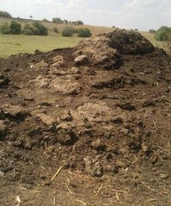 Gunoiul de grajd pune probleme fermierilor si autoritatilor locale