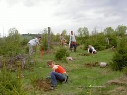 Peste 70.000 de puieti vor fi plantati in aceasta primavara in zona municipiului Baia Mare