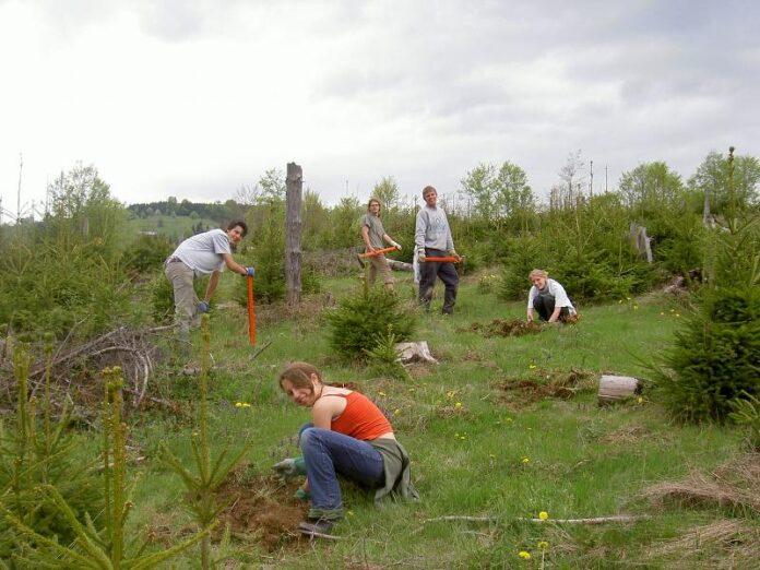Gavrilescu: Facem un studiu pentru un Program multianual de împăduriri