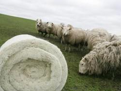 Izolatie termica inovatoare dintr-un material de cand lumea: lana de oaie