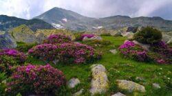 Ce inseamna sa fii nascut intr-un sit Natura 2000? Campania InfoNatura2000 la final.
