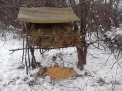 Nutret si concentrate, pentru ca animalele salbatice sa treaca iarna cu bine