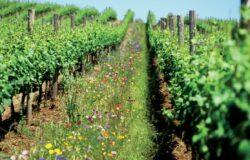 Noua politica agricola comuna a UE pune accent pe subventiile directe si pe culturile ecologice