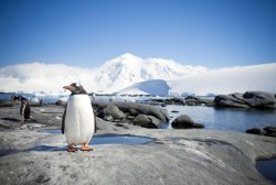 Antarctic marine sanctuary
