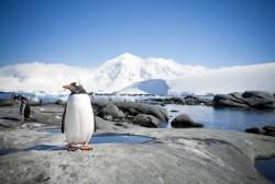 Antarctic marine sanctuary