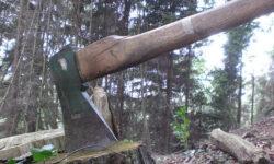 20.000 de cazuri de taieri ilegale de paduri s-au inregistrat anul trecut in Romania, dublu fata de anii anteriori