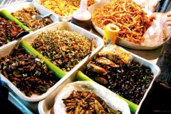 Tara europeana care vinde produse alimentare din insecte