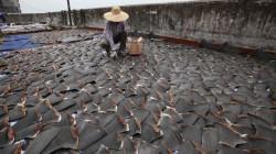 Animalele salbatice rare, interzise la mesele de lux din China