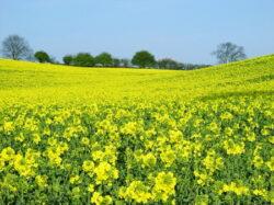 Mancare traditionala sau bio-diesel – Razboiul verde