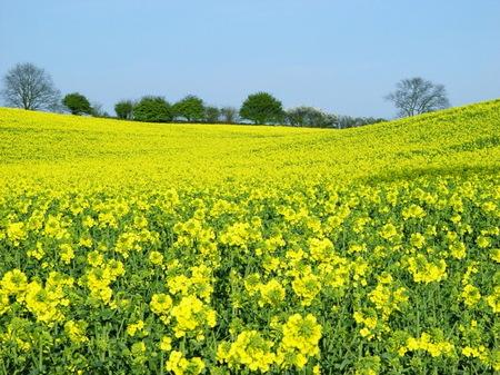 Mâncare tradi?ional? sau bio-diesel – R?zboiul verde