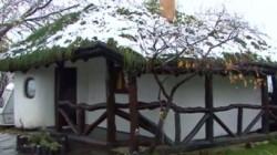 Locuinta eco, unica in Romania. Pe acoperisul casei se cultiva grau