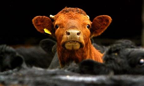 Comisia European? interzice clonarea animalelor în scopuri comerciale
