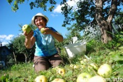 Rusii se salveaza de la OMG cu... dacea