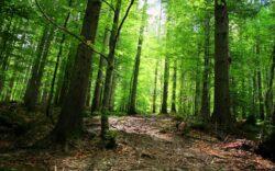 Fondul forestier al Romaniei a crescut cu peste 9.300 hectare anul trecut, la 6,54 milioane hectare