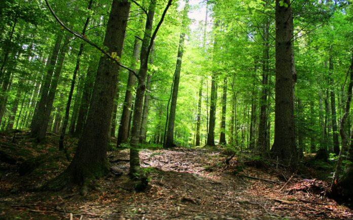 Dan Adamescu, retrocedare dubioasa a peste 1.300 de hectare de padure