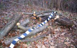 Hotii de lemne fura din paduri si in zilele libere de Craciun