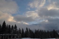 Padurea de la Dealul Negru sa nu mai fie taiata in urmatorul deceniu, cer ecologistii
