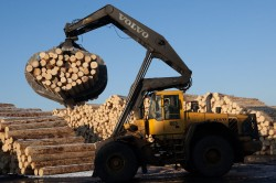 Exportatorii de lemn din regiunea Cernauti, anchetati de procurori