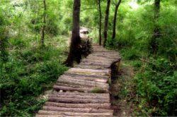 Tinerii aradeni promoveaza activitatile de recreere din Parcul Natural Lunca Muresului