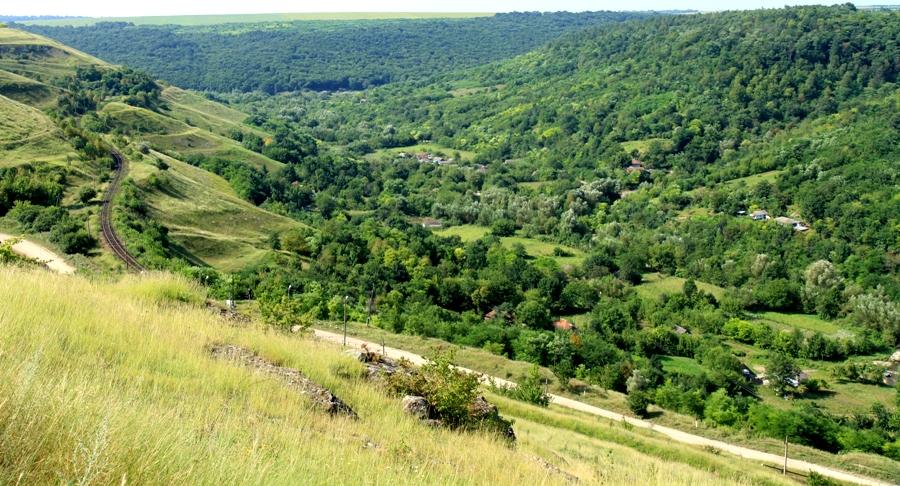 """""""Un arbore pentru d?uinuirea noastr?!"""" În Republica Moldova vor fi s?di?i circa 300 de mii de copaci"""
