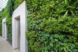 Sase motive pentru a planta pereti verzi