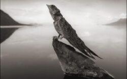 Lacul unde animalele mor la prima atingere a apei