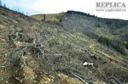 Doar o parte din suprafata de 70 hectare defrisata de pe Muntele Godeanu