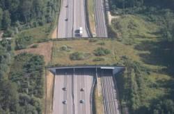 Guvernul aloca 30 de milioane de euro pentru pasaje subterane pentru ursi