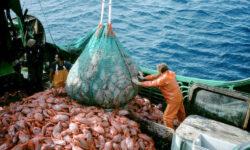Unda verde pentru o noua politica durabila de pescuit a UE