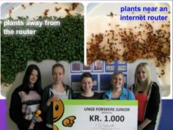 Experimentul unor elevi arata ca plantele nu cresc langa un router WiFi