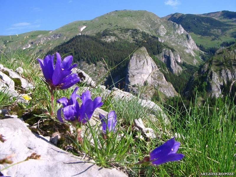 Retezatul, ultimul Peisaj Forestier Intact din zona de clim? temperat? a Europei