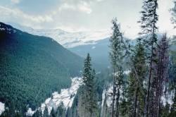 Romsilva investeste anual 12 milioane de lei pentru administrarea ariilor protejate