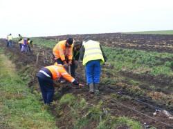 CJA si-a pus in practica proiectul verde: primele salcii energetice au fost plantate intre Semlac si Seitin