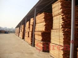 Varga anunta un proiect-pilot pentru vanzarea doar din depozite a lemnului exploatat