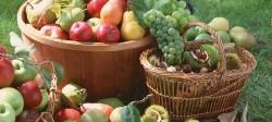 Care sunt cele mai profitabile culturi agricole ecologice in Moldova