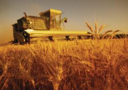 Un fost bancher elvetian face agricultura ecologica la Firiteaz