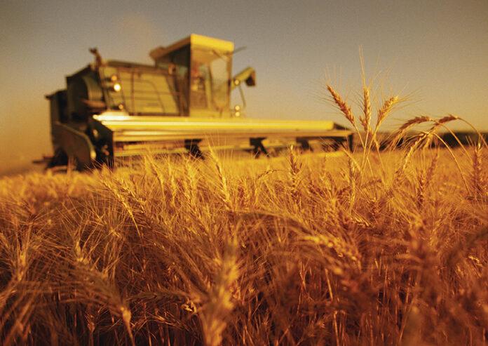 Agricultura ecologica inregistreaza o crestere de popularitate in randul fermierilor