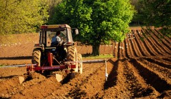 Galati: Culturi ecologice pe 3,7 % din suprafata cultivata
