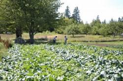 """Baciu, LAPAR: Romanii au compromis termenul """"agricultura ecologica"""". Avem 4.400 de ferme, in Europa sunt 400"""