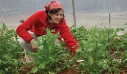 Cine sunt primii fermieri ecologici cu diploma din Romania?