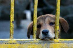 Parlamentul Republicii Moldova a decis la finele anului trecut sa exluda taxa pentru posesorii de caini si pentru evacuarea deseurilor