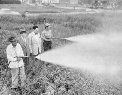 Insecticidul DDT poate dezvolta boala Alzheimer