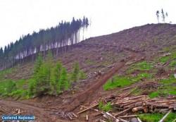 Peste 900 de hectare de padure - rase ilegal de pe fata pamantului