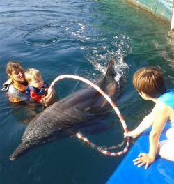 Terapia cu delfini, o speranta pentru copiii cu dizabilitati