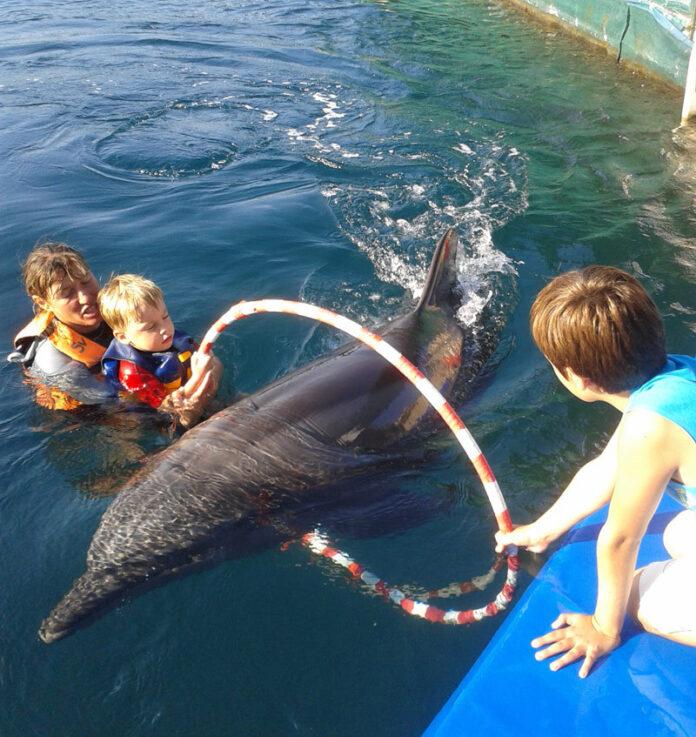 Un mare mister biologic al balenelor ?i delfinilor a fost descifrat