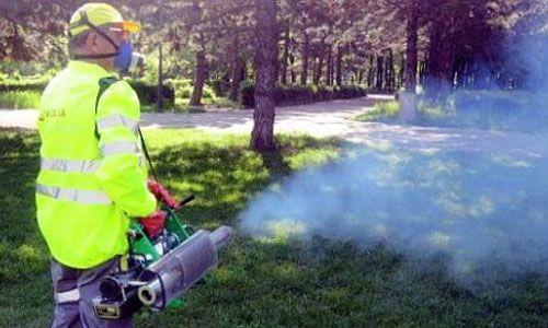 In Bucuresti s-ar putea infiinta un serviciu public de salubrizare, dezinsectie si deratizare