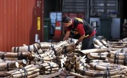 Sase tone de fildes, distruse in mod public, in China