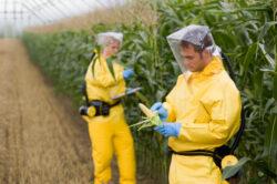 Parlamentul European se opune autorizarii porumbului modificat genetic