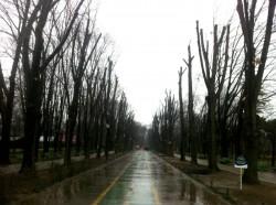 Garda de Mediu a stopat tunderea copacilor din Parcul Herastrau. Primaria Capitalei a taiat ilegal 83 de arbori