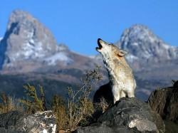 APM Buzau a incheiat activitatea de evaluare a animalelor salbatice din specii protejate